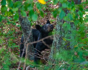 The Day I Didn't Get Chased By a Bear – Shenandoah National Park